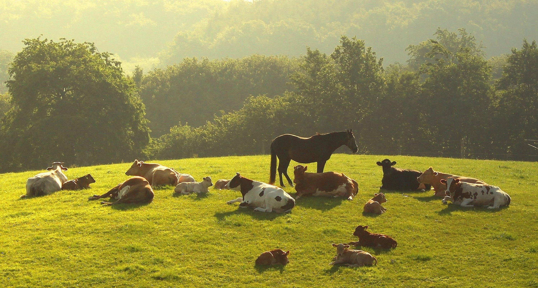 82109 скачать обои Животные, Лошадь, Трава, Вечер, Деревья, Лежать, Стадо, Коровы - заставки и картинки бесплатно