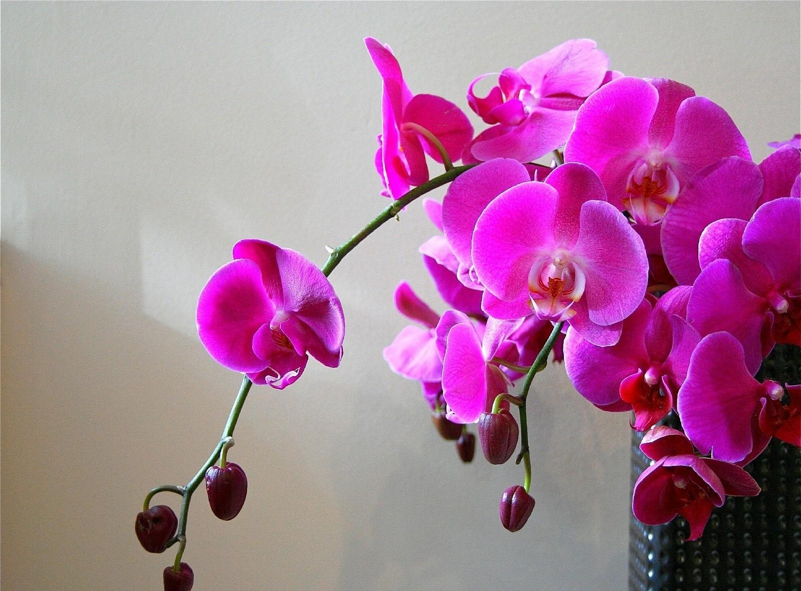 154581 download wallpaper Flowers, Bright, Branch, Vase, Orchids screensavers and pictures for free