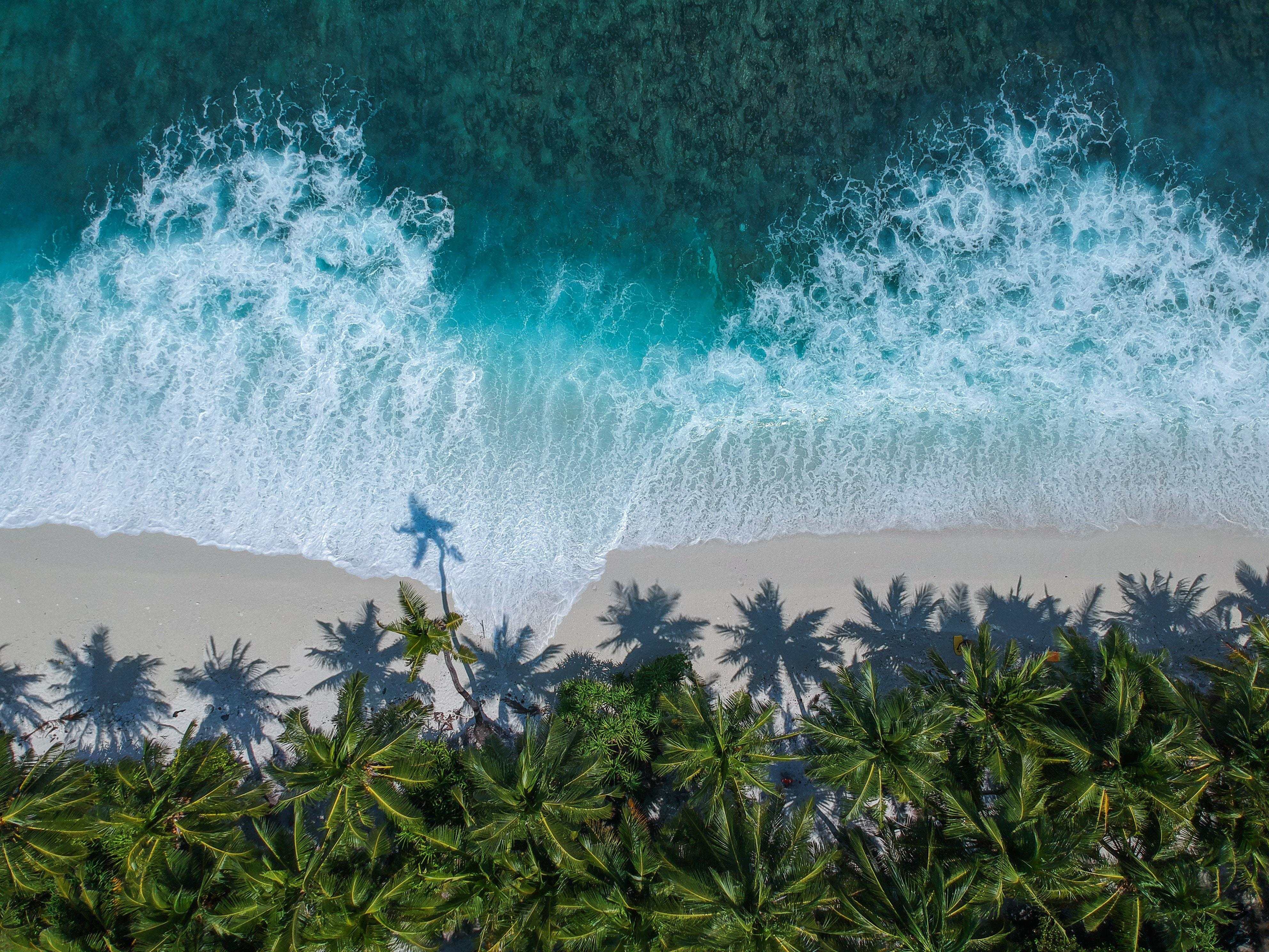Kostenlose Palms HD-Bilder herunterladen