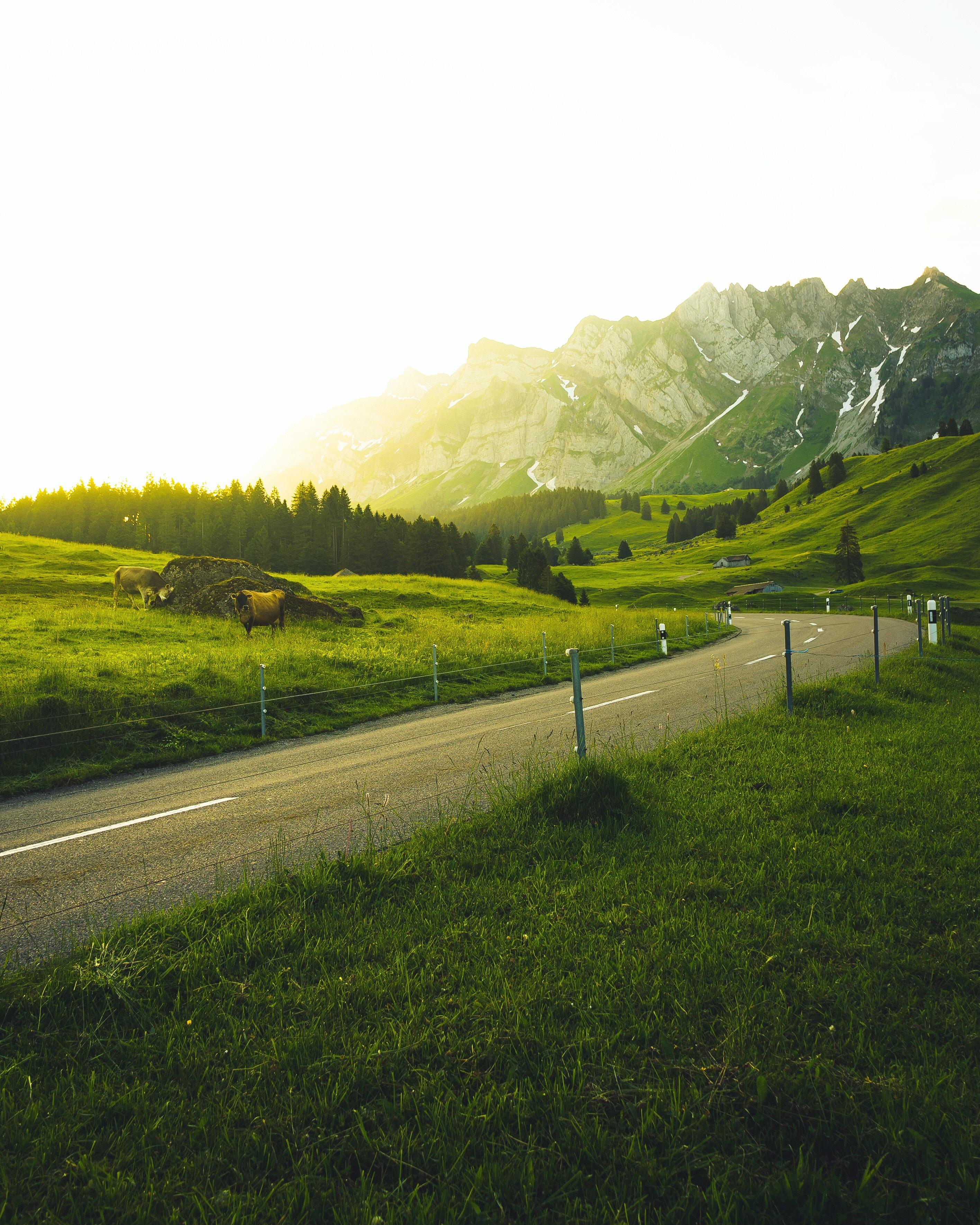 103127 скачать обои Швейцария, Пейзаж, Природа, Деревья, Трава, Горы, Дорога, Солнечный Свет - заставки и картинки бесплатно