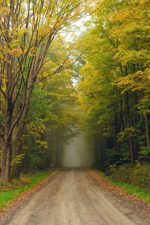 118712 скачать обои Деревья, Туман, Природа, Дорога, Лес - заставки и картинки бесплатно