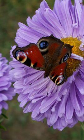 7028 скачать обои Растения, Бабочки, Цветы, Насекомые - заставки и картинки бесплатно