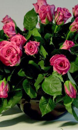 39922 télécharger le fond d'écran Plantes, Roses, Bouquets - économiseurs d'écran et images gratuitement