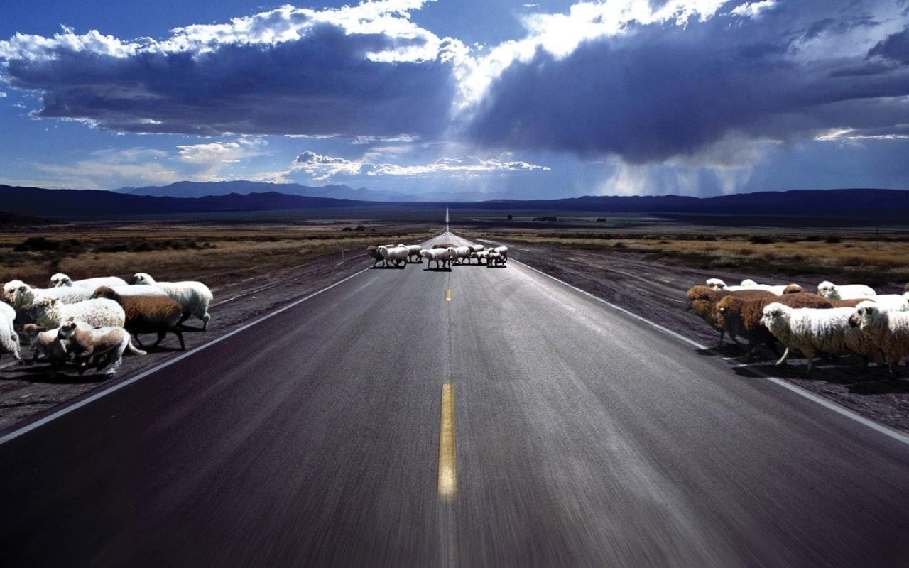 2388 Hintergrundbild herunterladen Tiere, Sky, Roads, Rams - Bildschirmschoner und Bilder kostenlos