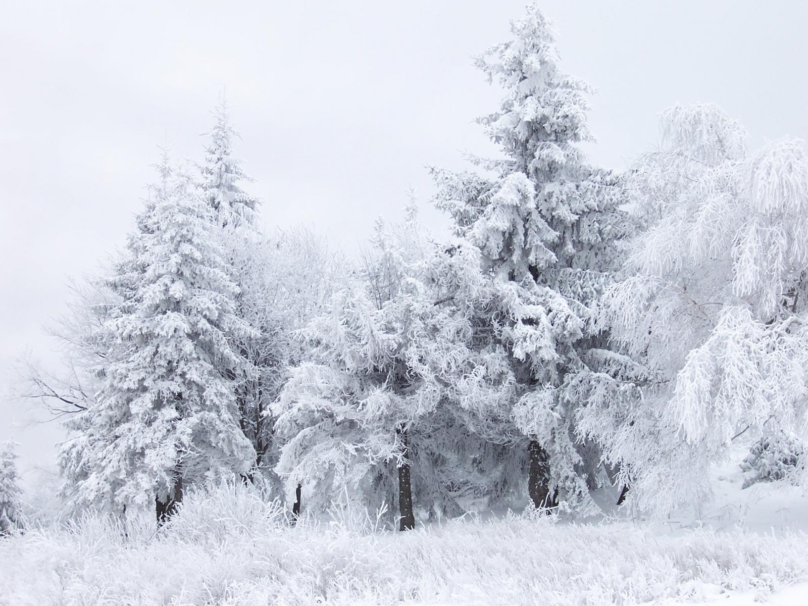 9243 скачать обои Пейзаж, Зима, Деревья, Елки - заставки и картинки бесплатно