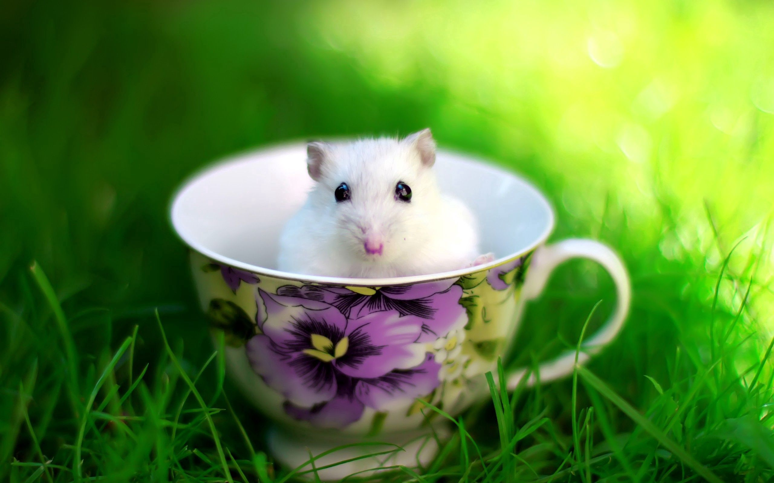 91096 download wallpaper Animals, Hamster, Cup, Rodent, Grass screensavers and pictures for free