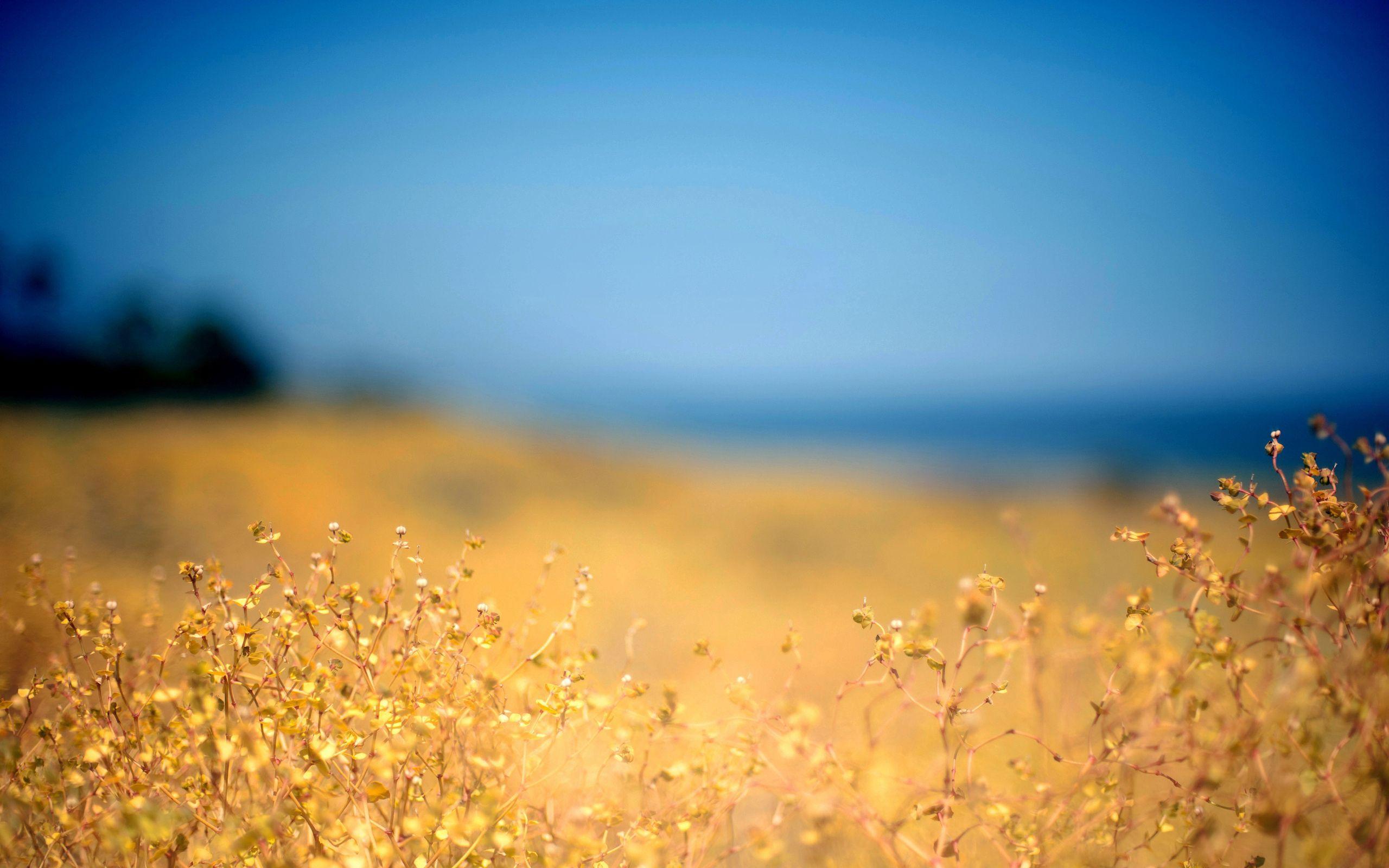 82495 Заставки и Обои Трава на телефон. Скачать Природа, Трава, Желтая, Передний План, Осень, Небо, Голубое, Берег, Полдень картинки бесплатно