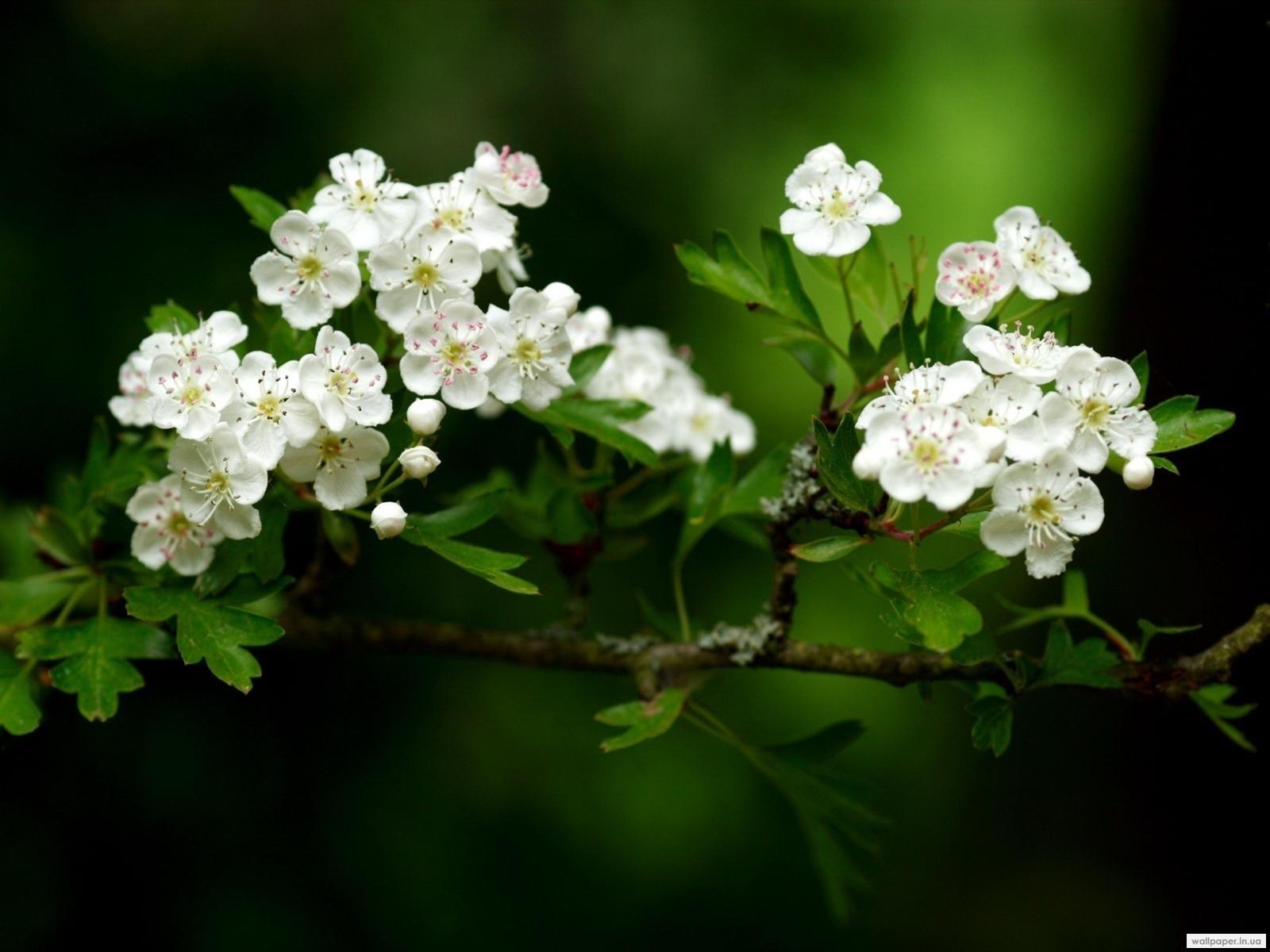 3742 скачать обои Растения, Цветы - заставки и картинки бесплатно