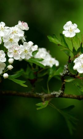 3742 descargar fondo de pantalla Plantas, Flores: protectores de pantalla e imágenes gratis