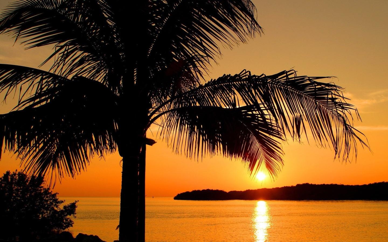 4218 скачать обои Пейзаж, Деревья, Закат, Солнце, Пальмы - заставки и картинки бесплатно