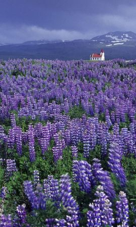 2063 descargar fondo de pantalla Plantas, Paisaje, Flores, Hierba, Brezo: protectores de pantalla e imágenes gratis
