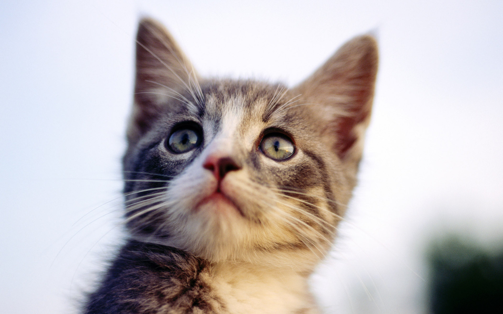 49395 download wallpaper Animals, Cats screensavers and pictures for free