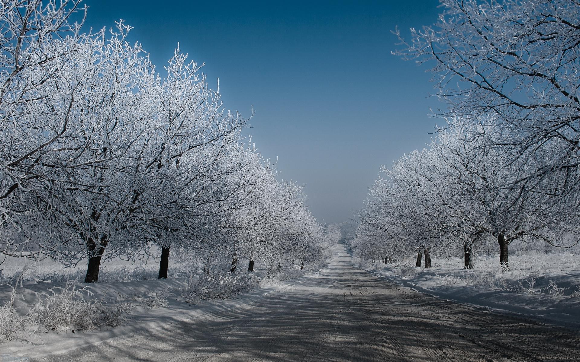 32849 скачать обои Пейзаж, Зима, Деревья, Дороги - заставки и картинки бесплатно