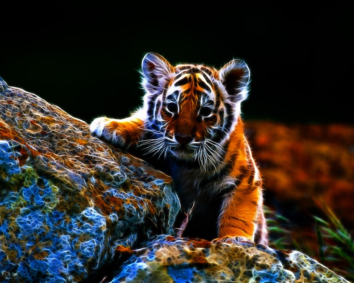 27023 descargar fondo de pantalla Animales, Tigres: protectores de pantalla e imágenes gratis