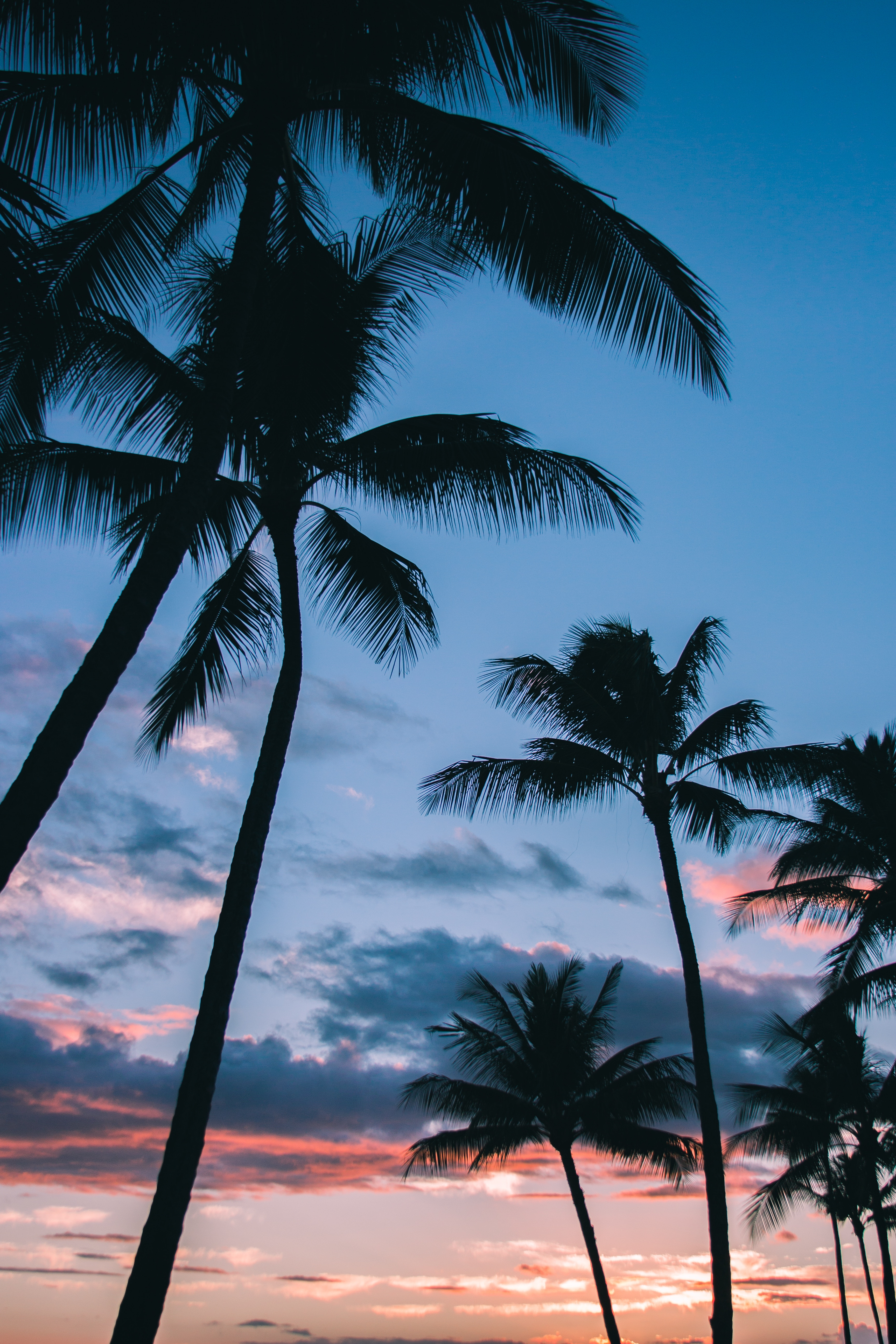 136899 download wallpaper Nature, Tropics, Sky, Branches, Palms screensavers and pictures for free