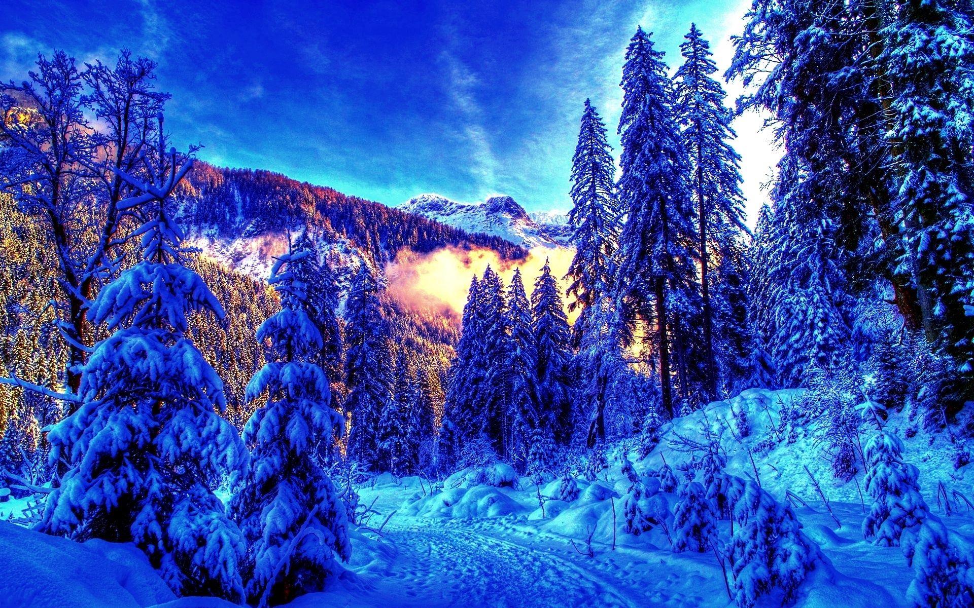 86218 Hintergrundbild herunterladen Licht, Winterreifen, Natur, Bäume, Scheinen, Wald, Farbe, Morgen, Farben, Erwachen - Bildschirmschoner und Bilder kostenlos