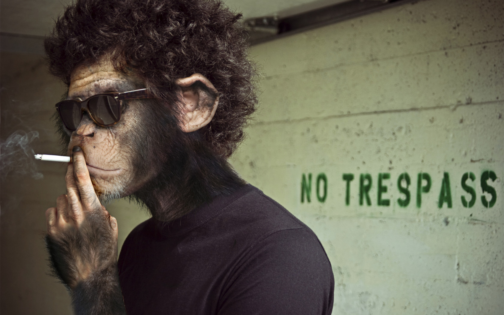 13755 download wallpaper Animals, People, Art Photo, Monkeys screensavers and pictures for free