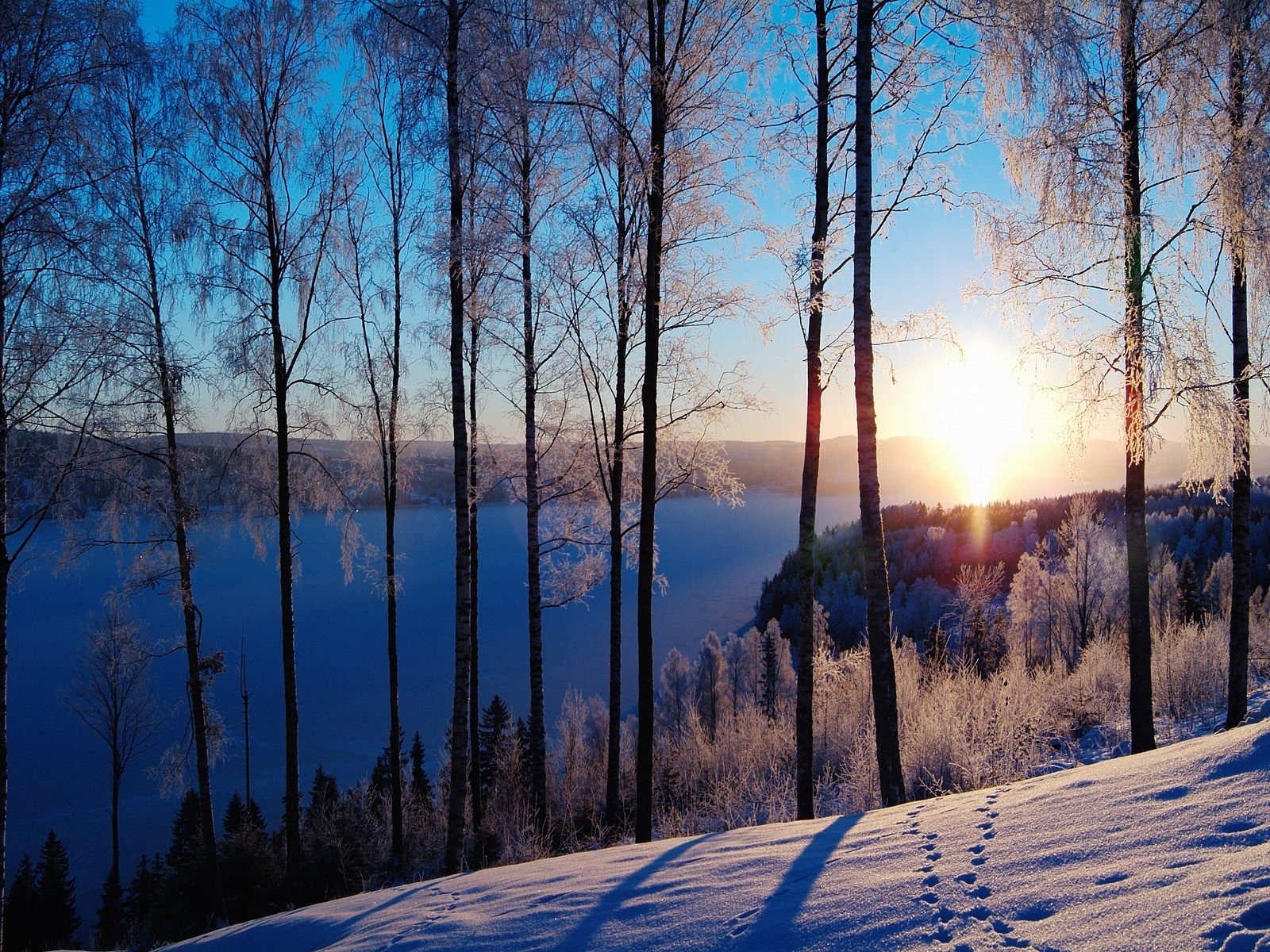986 download wallpaper Landscape, Winter, Trees, Sunset, Snow screensavers and pictures for free