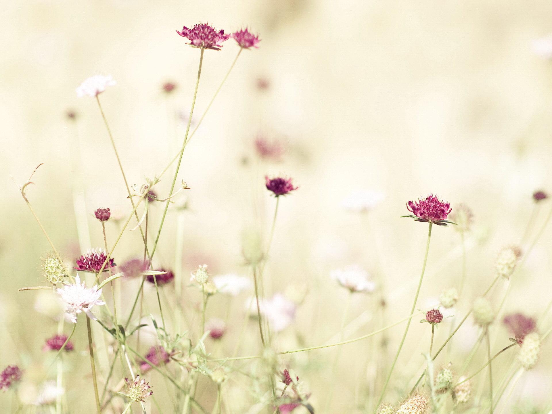 17930 скачать обои Растения, Цветы - заставки и картинки бесплатно