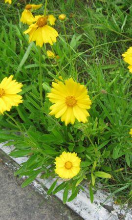 493 скачать обои Растения, Цветы, Трава - заставки и картинки бесплатно