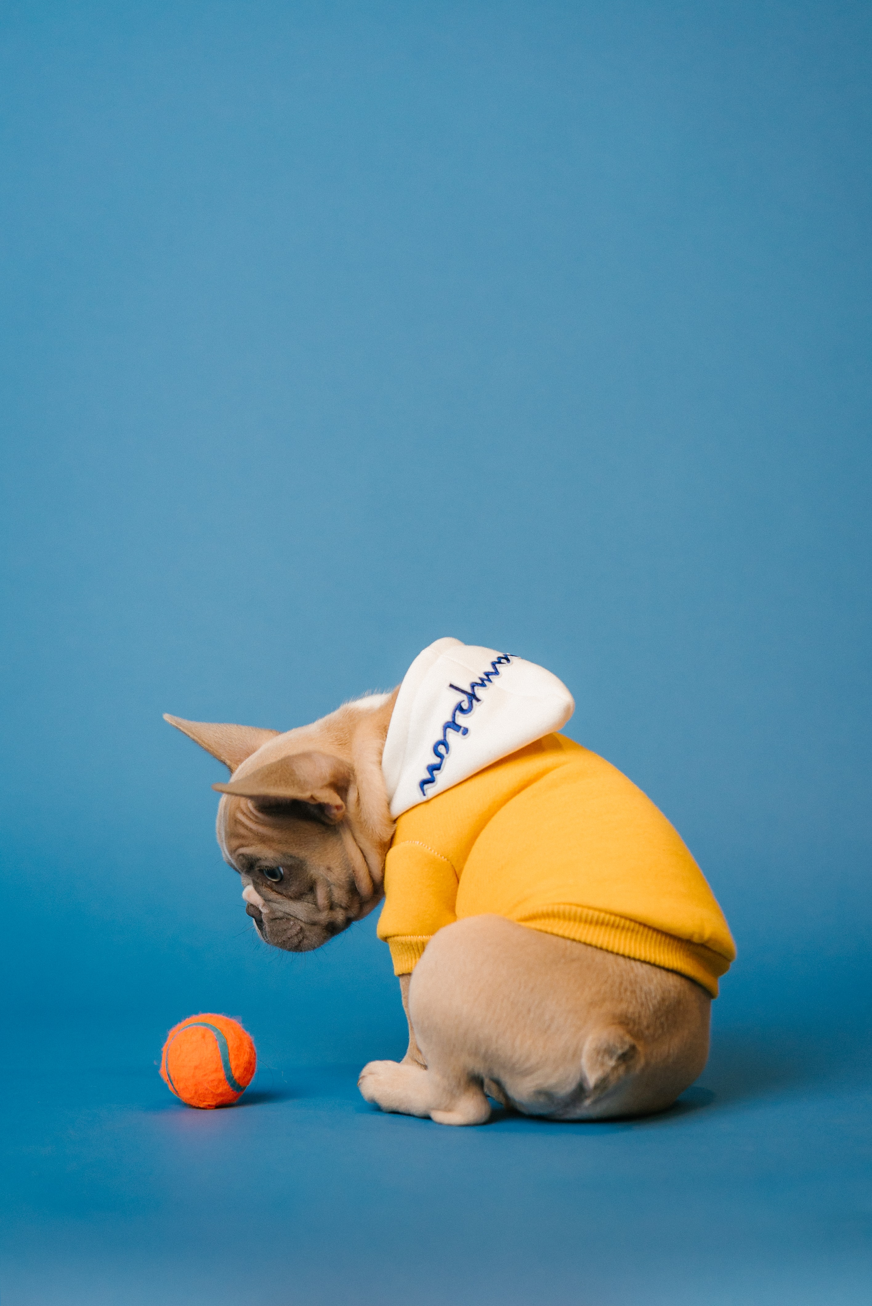 131202 download wallpaper Animals, Pug, Dog, Ball, Pet screensavers and pictures for free