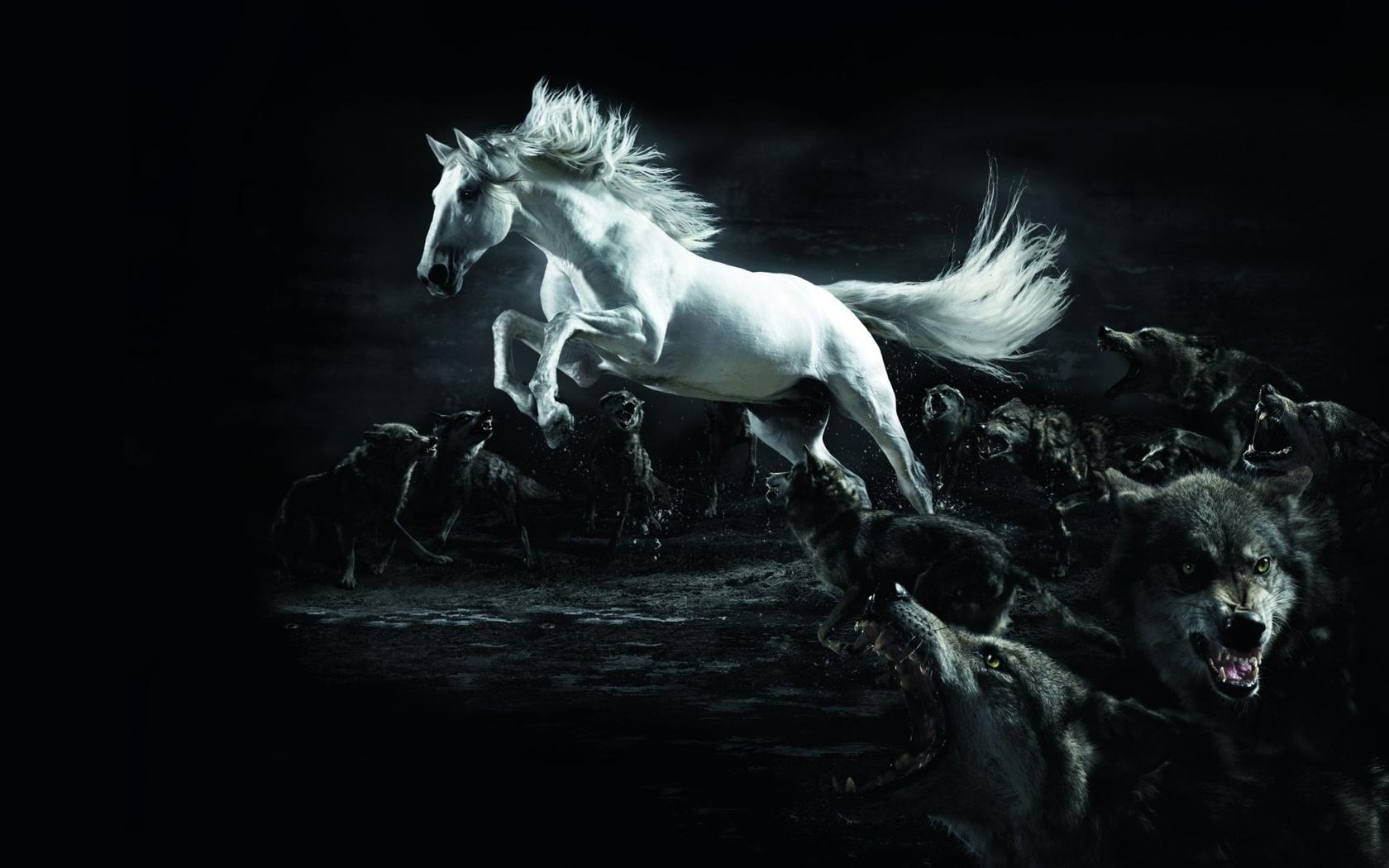 46911 Hintergrundbild herunterladen Wölfe, Tiere, Pferde - Bildschirmschoner und Bilder kostenlos