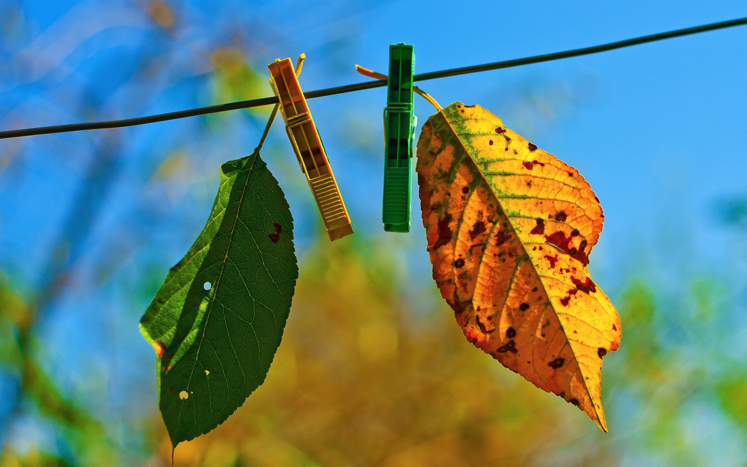 89846 download wallpaper Macro, Leaves, Hang, Rope, Sky, Autumn, Clothespins screensavers and pictures for free