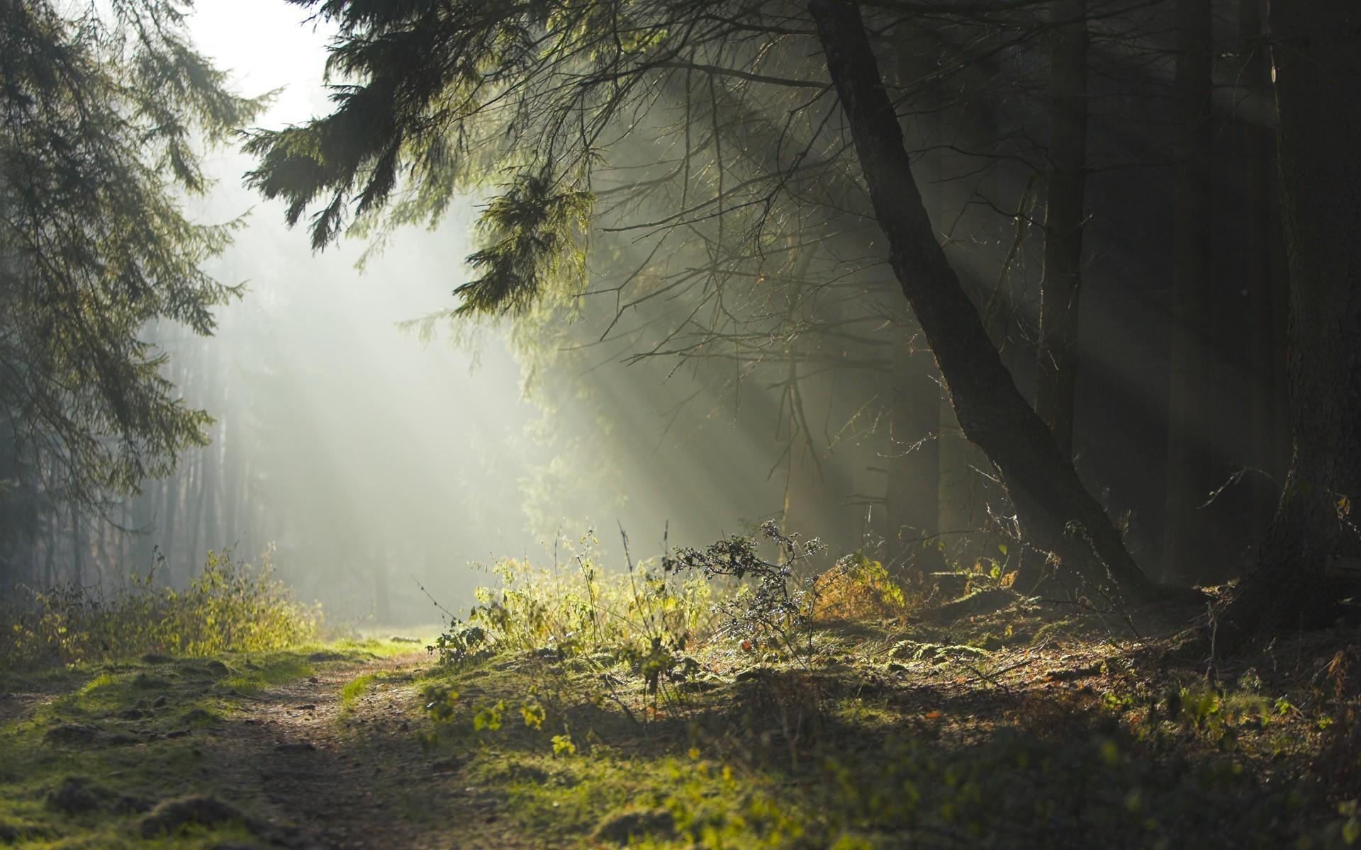 23723 скачать обои Пейзаж, Деревья, Дороги - заставки и картинки бесплатно