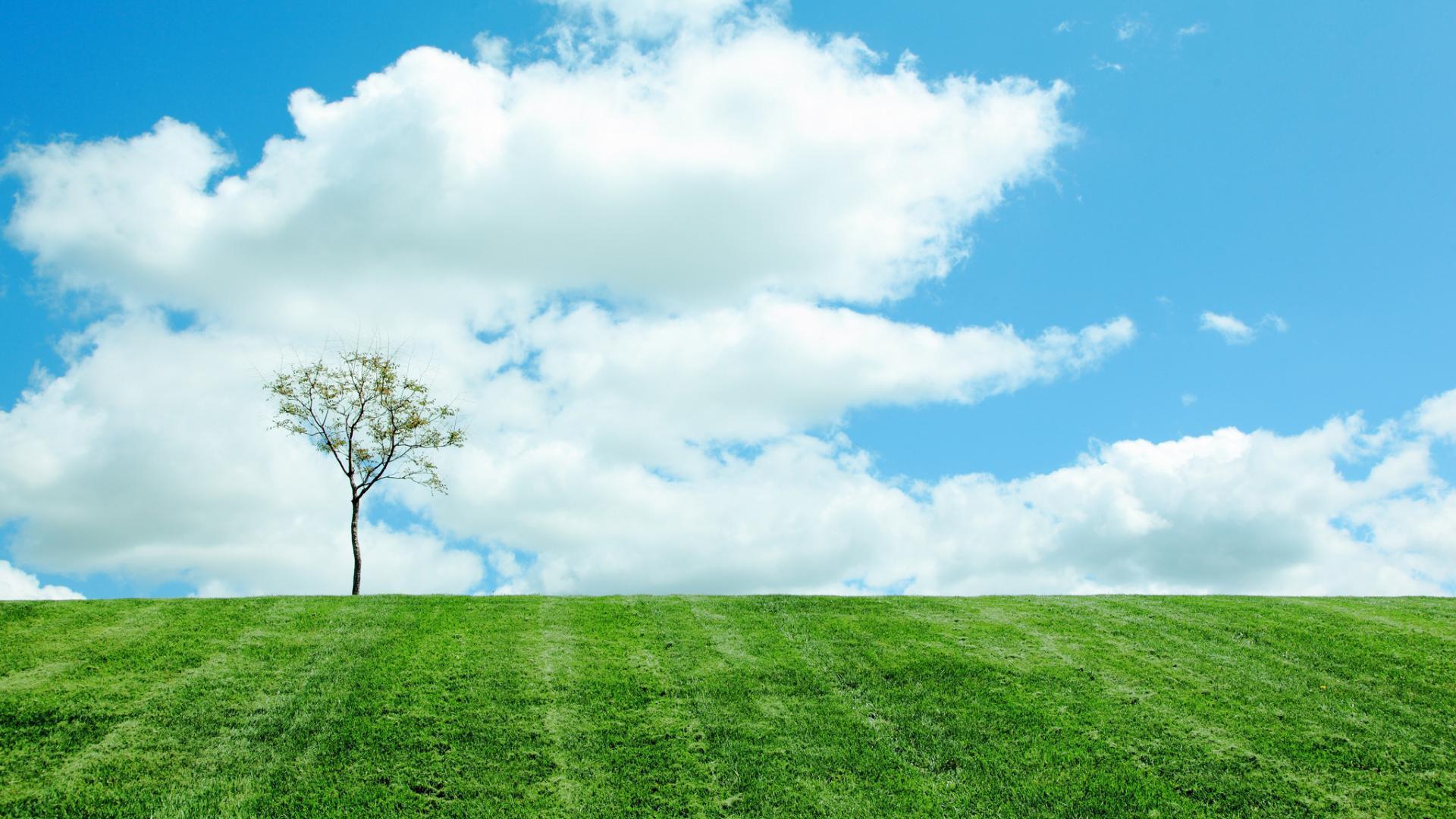 27536 скачать обои Пейзаж, Деревья, Поля, Облака - заставки и картинки бесплатно