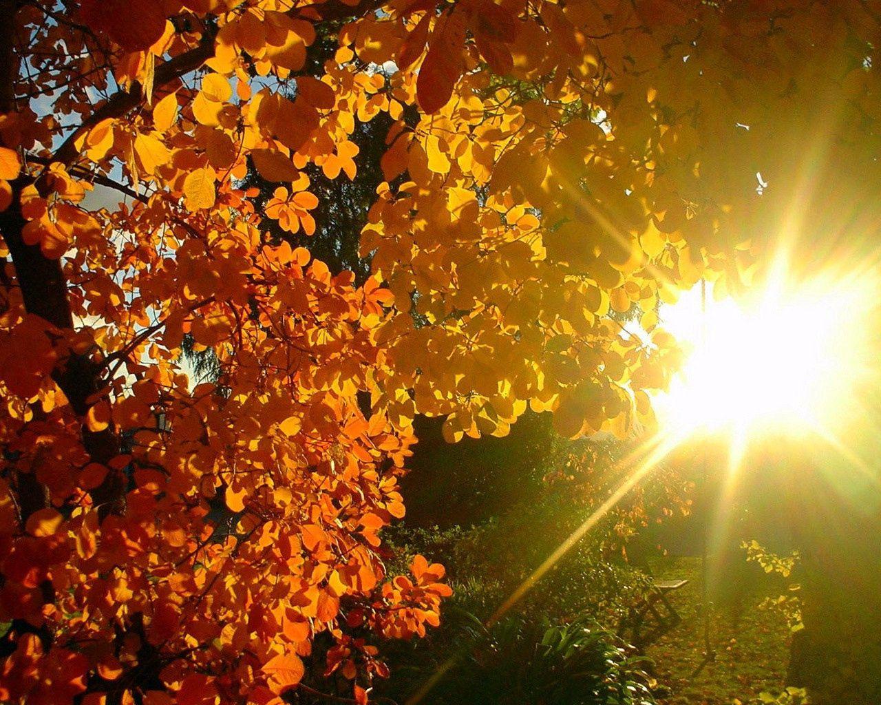 76527 скачать Желтые обои на телефон бесплатно, Осень, Природа, Листья, Солнце, Блики, Свет, Лучи, Дерево Желтые картинки и заставки на мобильный
