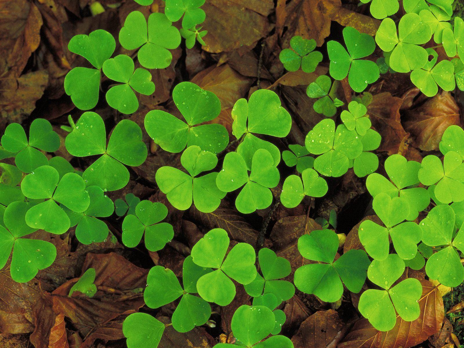 19997 скачать обои Растения, Трава, Листья - заставки и картинки бесплатно
