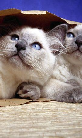 54379 baixar papel de parede Animais, Gatos, Casal, Par, Pacote, Papel - protetores de tela e imagens gratuitamente