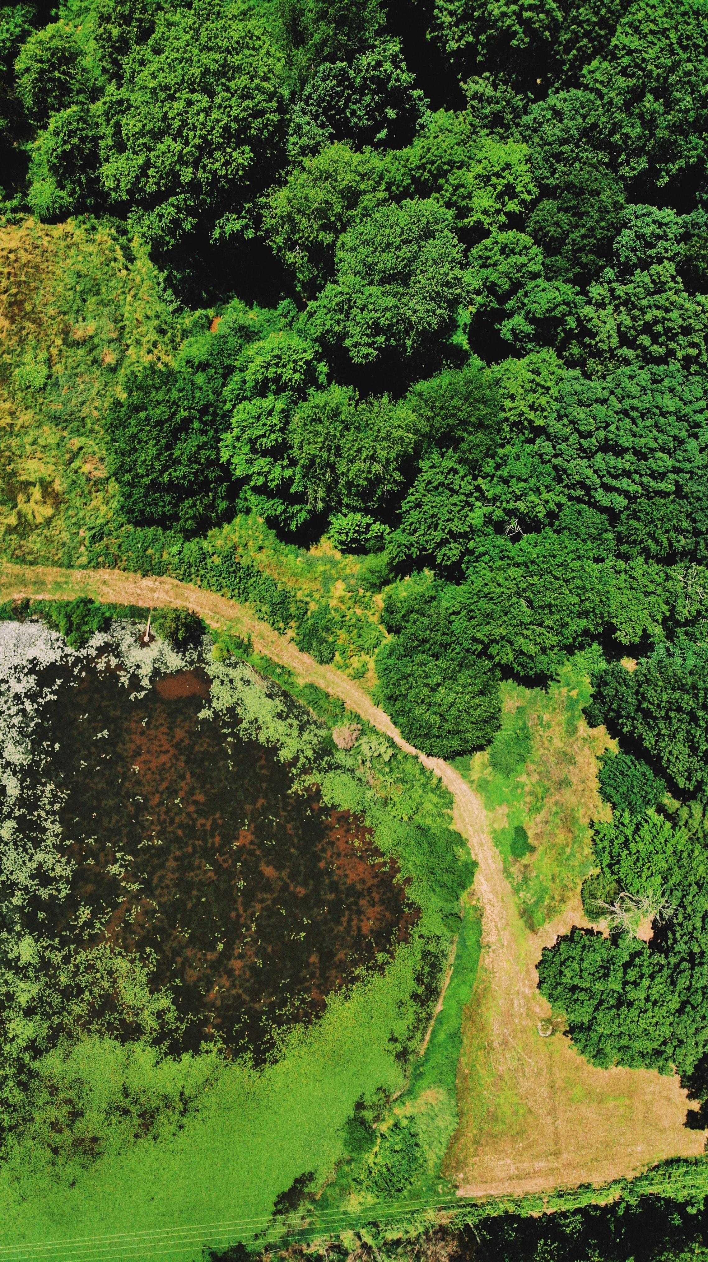 155180 免費下載壁紙 性质, 沼泽, 水, 水体, 树, 从上面看, 顶视图 屏保和圖片