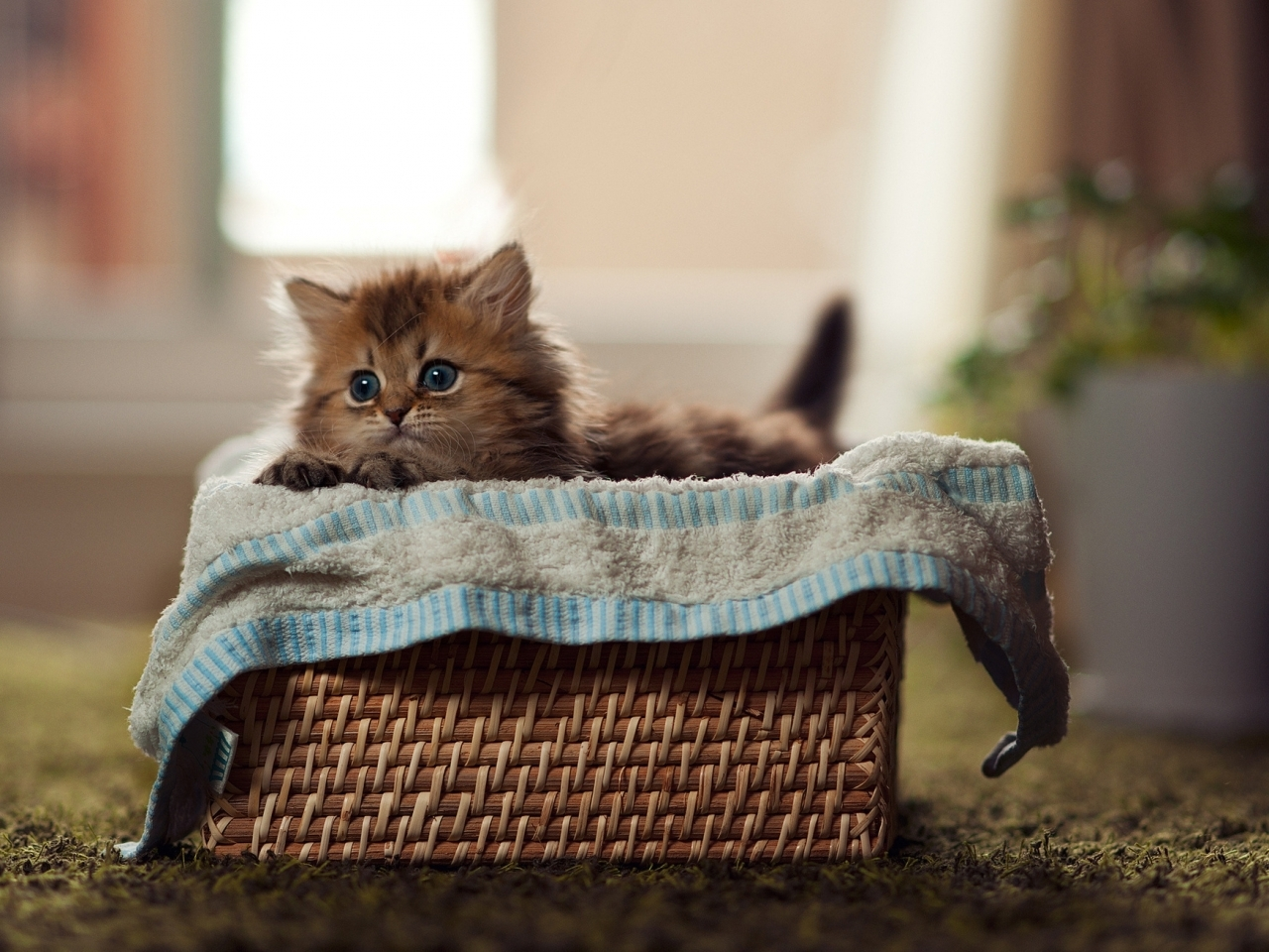 15652 download wallpaper Animals, Cats screensavers and pictures for free