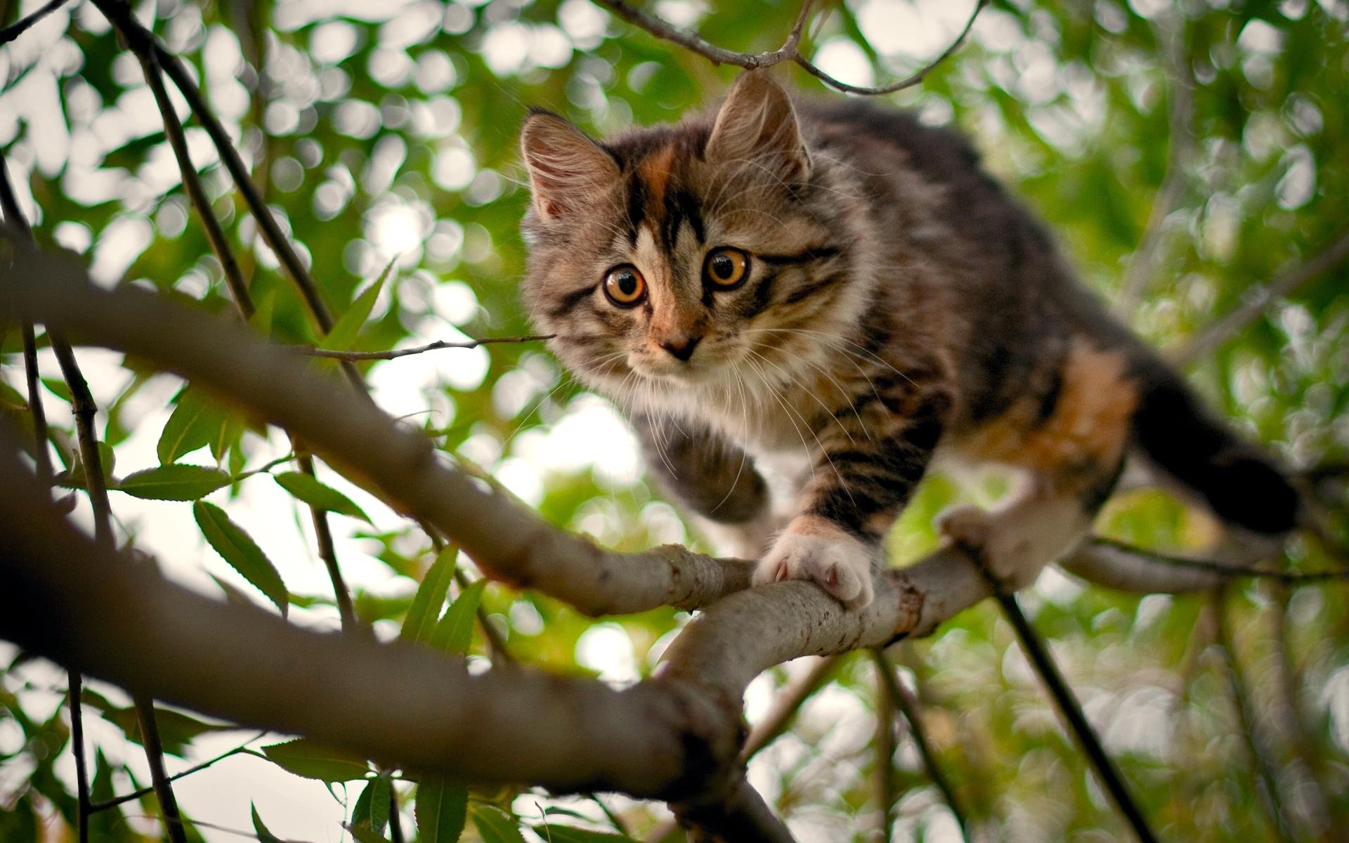 48000 Заставки и Обои Кошки (Коты, Котики) на телефон. Скачать Кошки (Коты, Котики), Животные картинки бесплатно