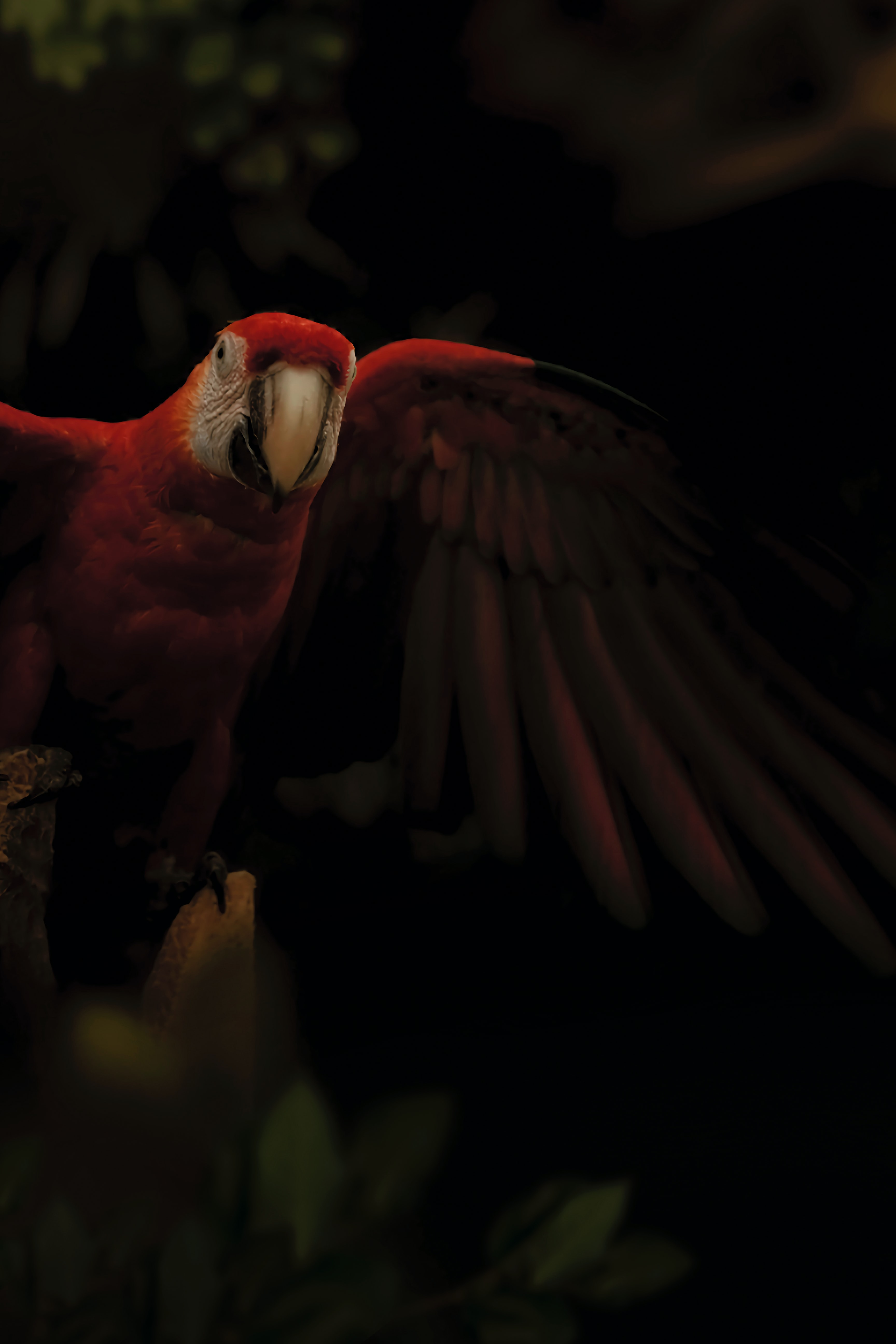 150585 download wallpaper Animals, Macaw, Parrots, Bird, Multicolored, Motley, Dark screensavers and pictures for free