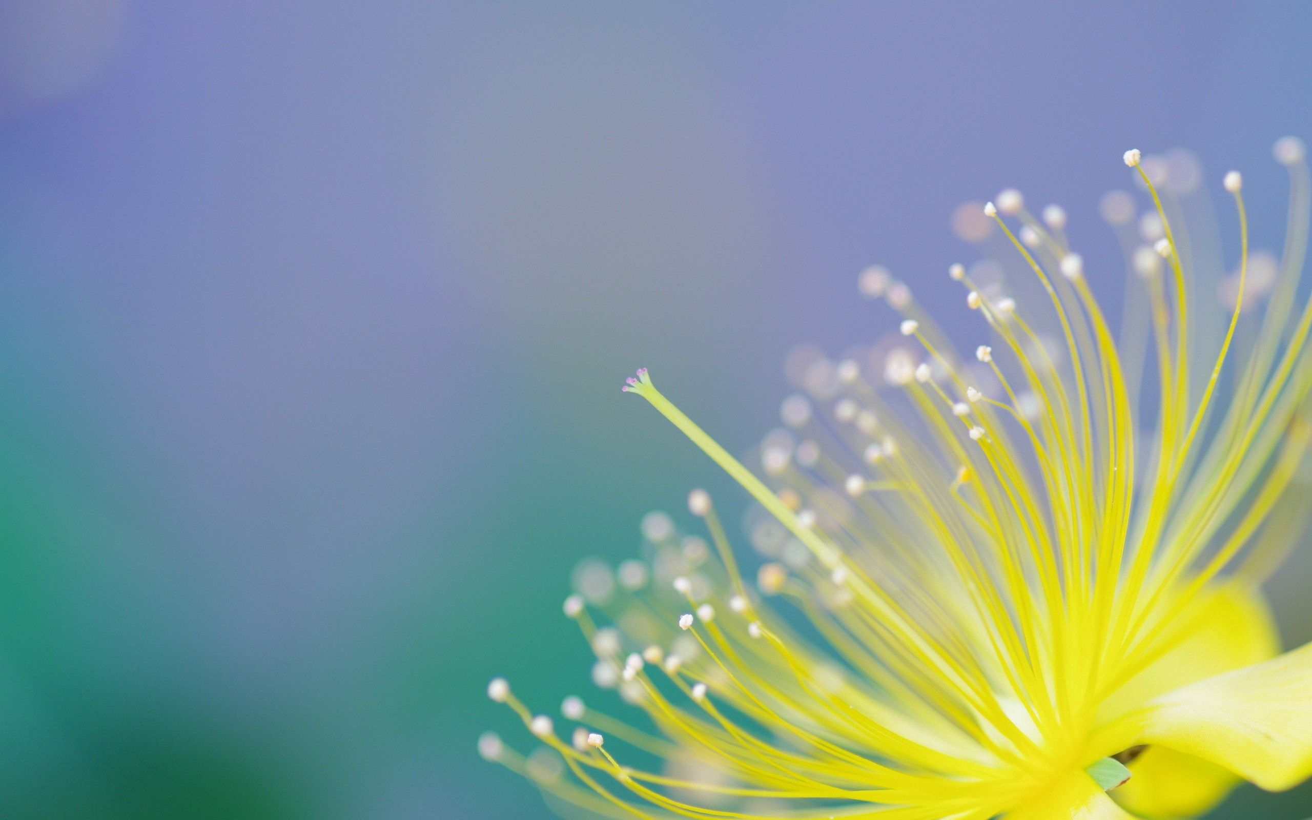 121811 download wallpaper Background, Flower, Plant, Macro, Petals screensavers and pictures for free