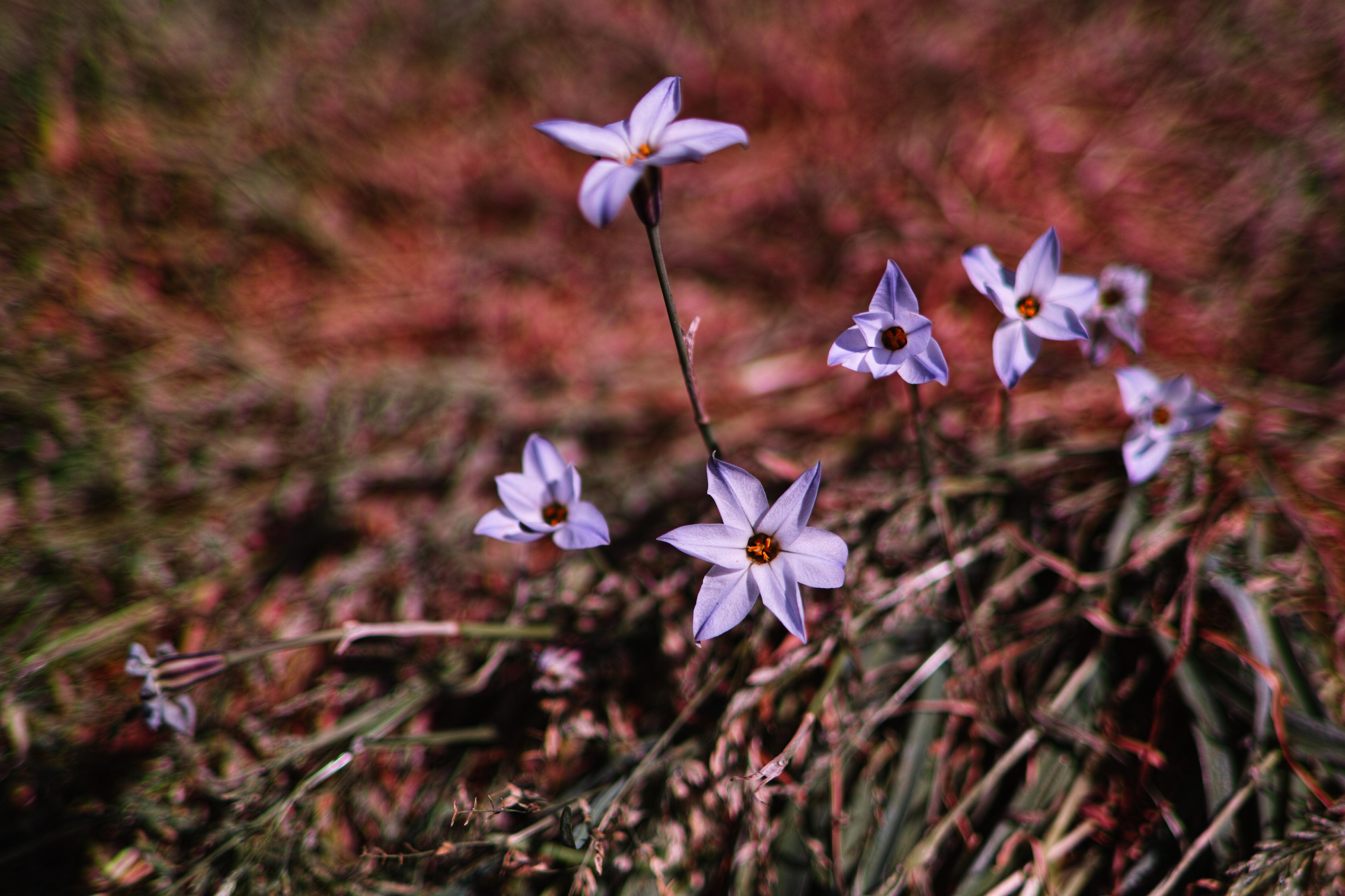 156359 скачать обои Цветы, Фиолетовый, Весна, Растения - заставки и картинки бесплатно