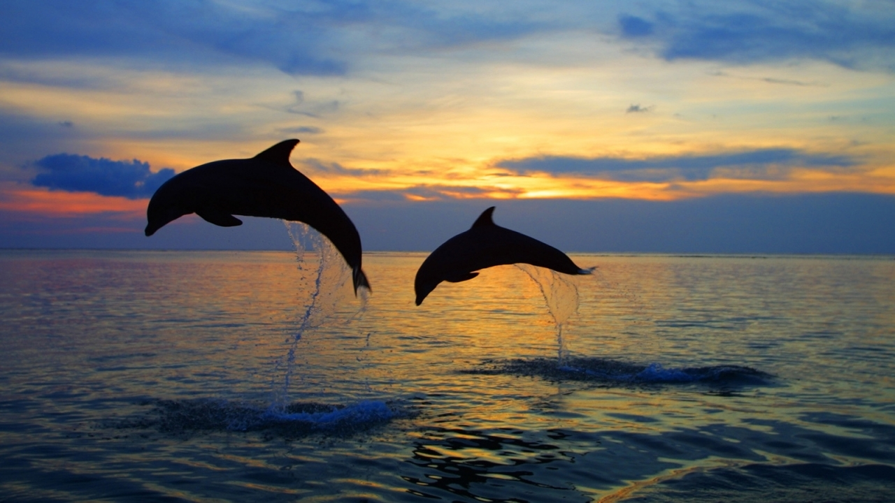 45592 скачать обои Животные, Пейзаж, Дельфины, Море - заставки и картинки бесплатно