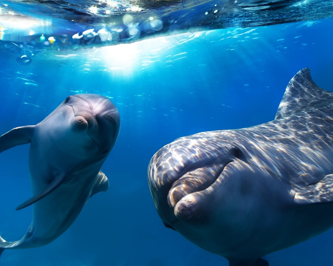 16102 download wallpaper Animals, Dolfins, Sea, Fishes screensavers and pictures for free