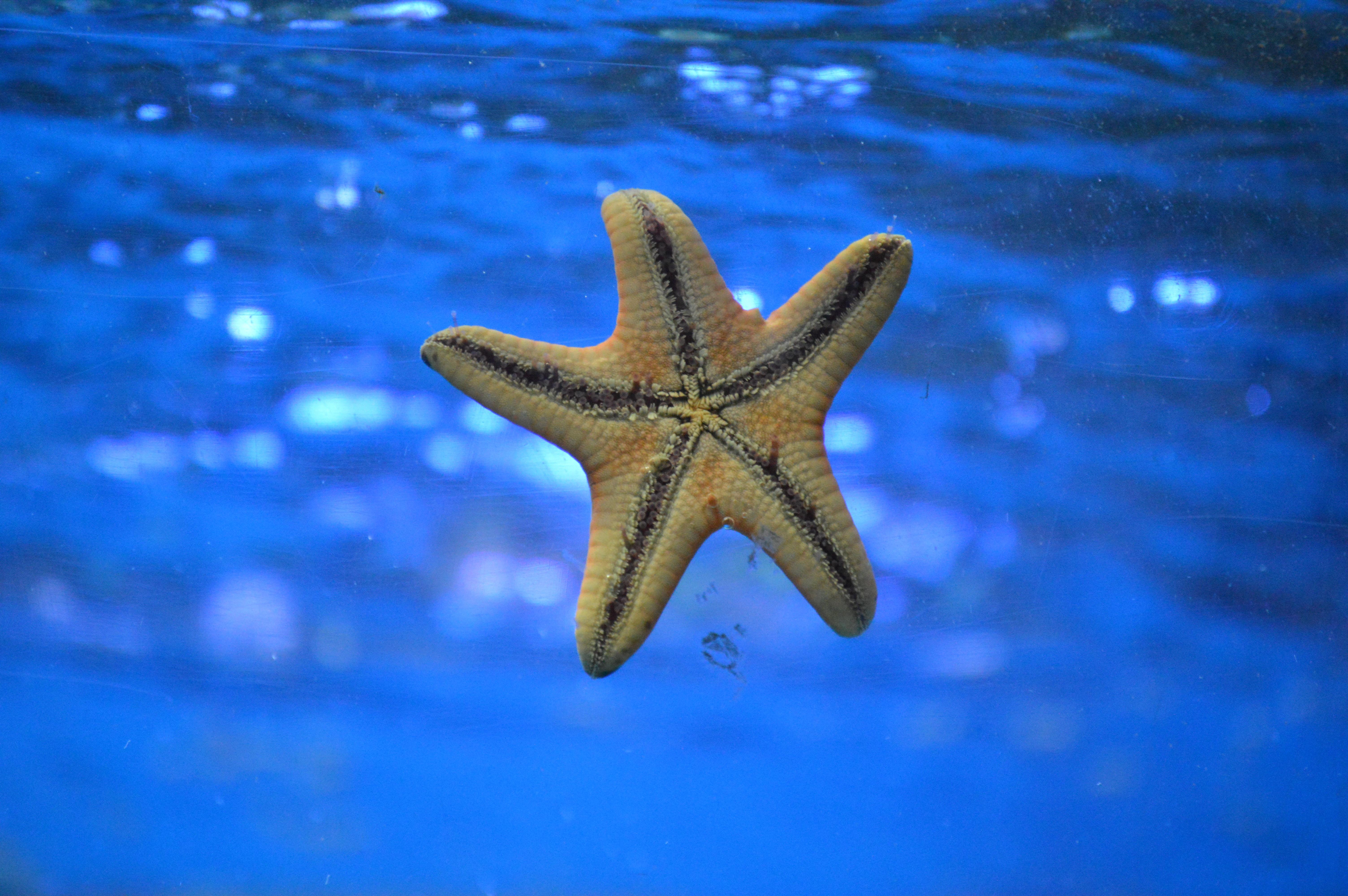141739 download wallpaper Nature, Starfish, Underwater World, To Swim, Swim screensavers and pictures for free