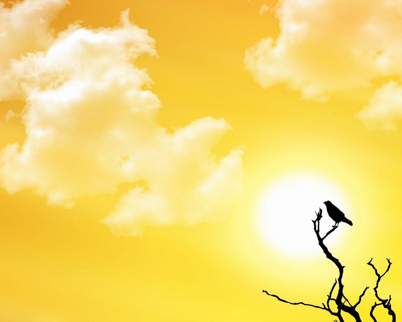 5600 download wallpaper Landscape, Sky, Sun, Crows screensavers and pictures for free