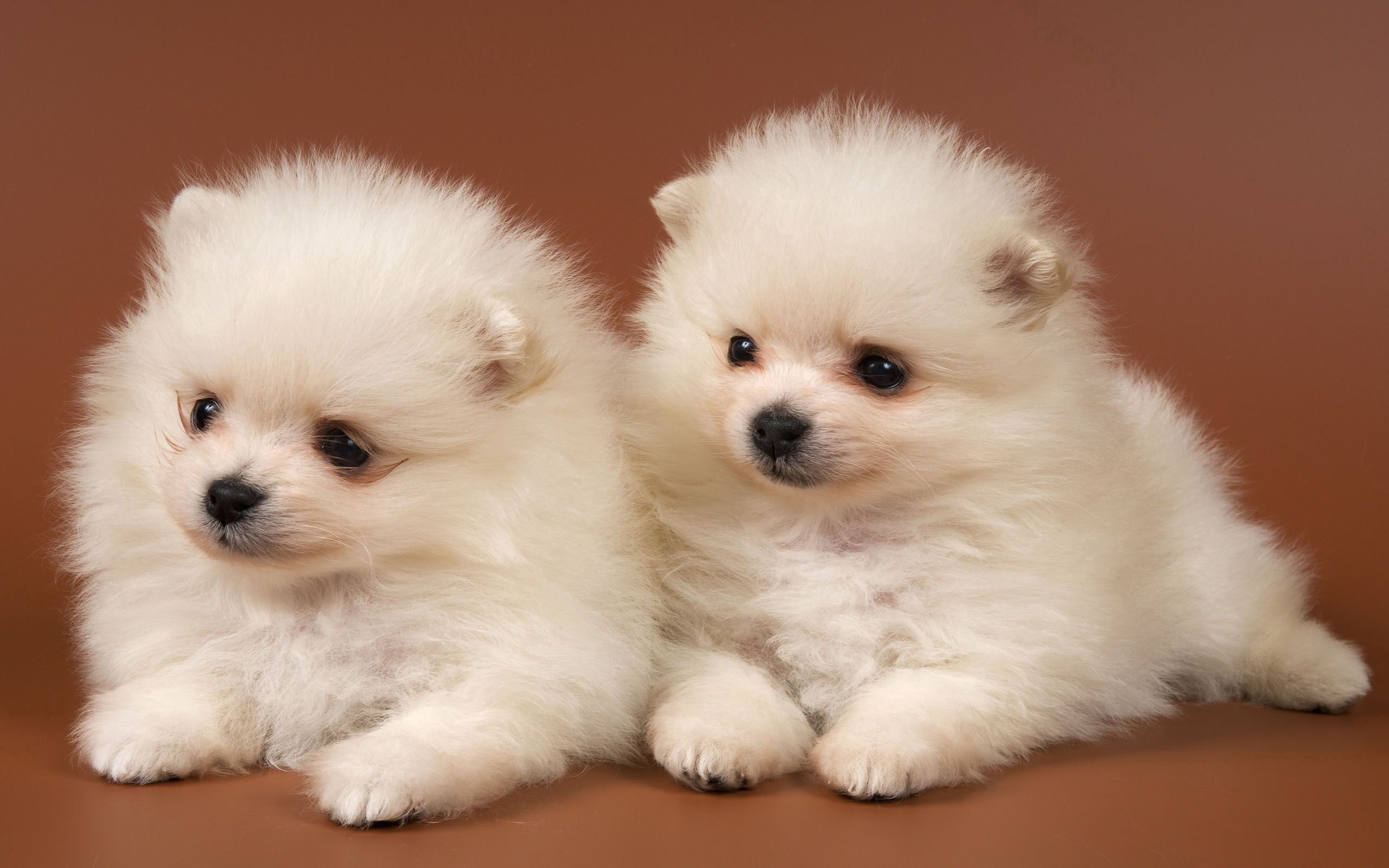 109418 download wallpaper Animals, Puppies, Couple, Pair, Toddlers, Kids screensavers and pictures for free