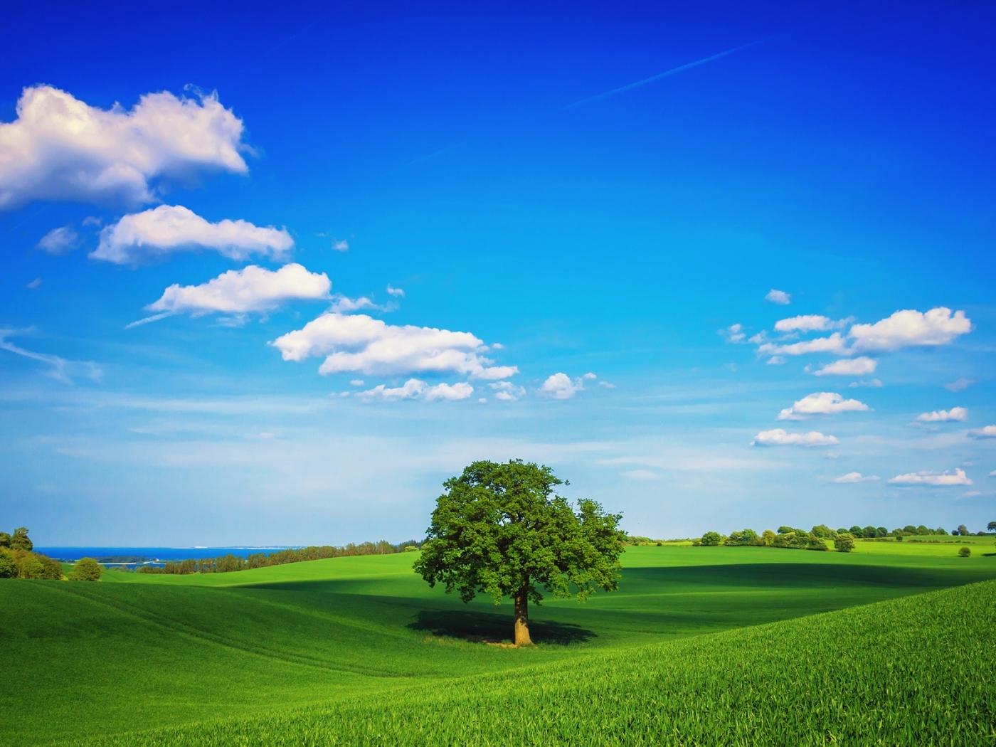 27181 скачать обои Пейзаж, Деревья, Поля, Небо, Облака - заставки и картинки бесплатно