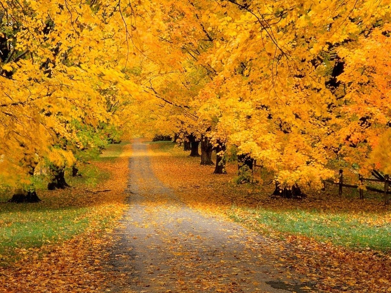 25255 скачать обои Пейзаж, Деревья, Дороги, Осень - заставки и картинки бесплатно