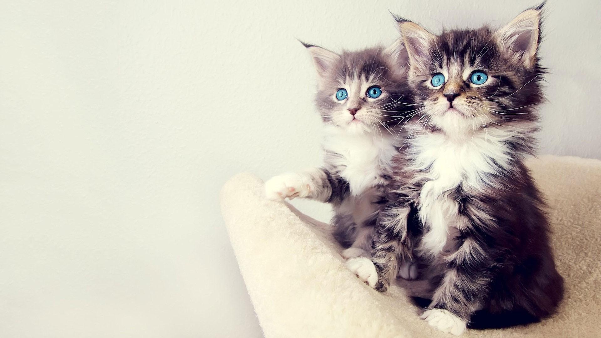 24998 скачать обои Животные, Кошки (Коты, Котики) - заставки и картинки бесплатно