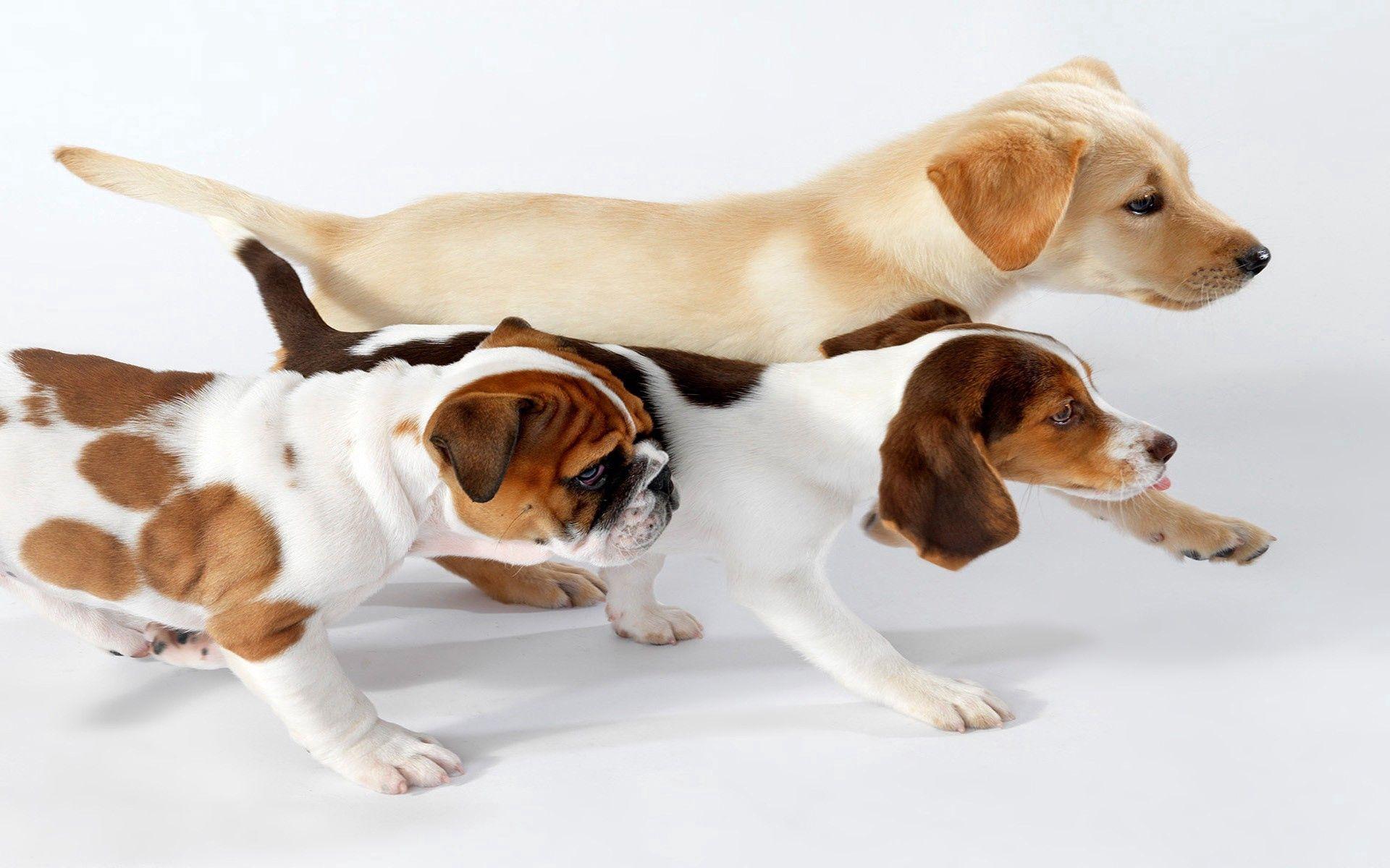 117417 descargar fondo de pantalla Animales, Perros, Tres, Correr, Corriente, Color: protectores de pantalla e imágenes gratis
