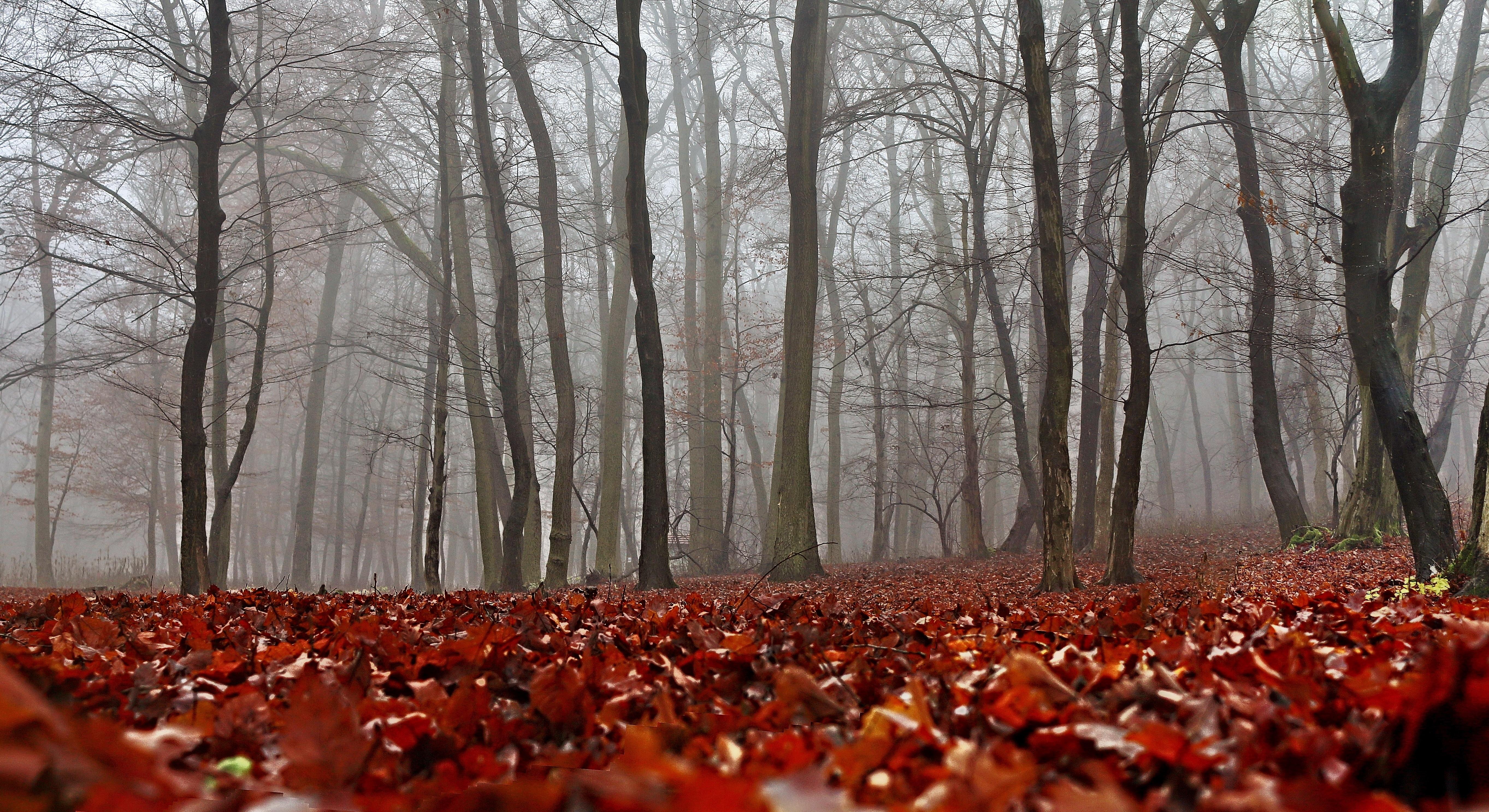 133037 Hintergrundbild 128x160 kostenlos auf deinem Handy, lade Bilder Natur, Herbst, Wald, Nebel, Laub 128x160 auf dein Handy herunter