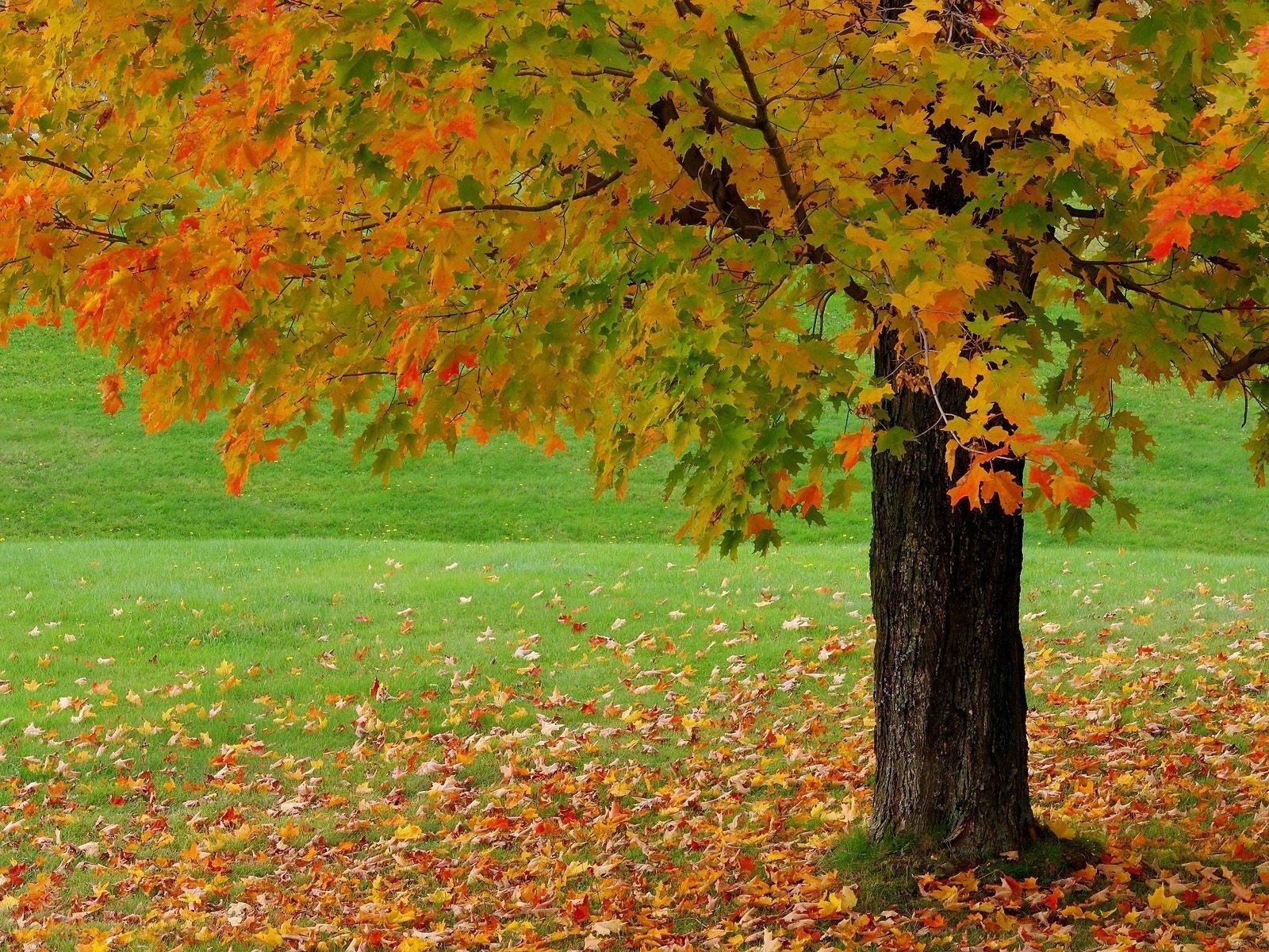 9406 скачать обои Пейзаж, Деревья, Осень - заставки и картинки бесплатно
