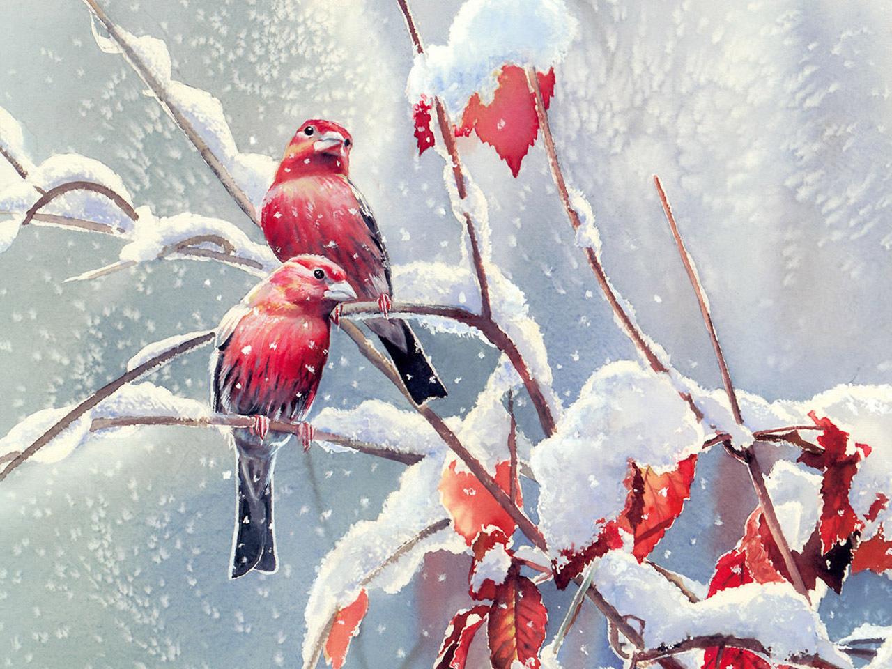8103 Salvapantallas y fondos de pantalla Imágenes en tu teléfono. Descarga imágenes de Animales, Invierno, Birds, Nieve, Imágenes gratis